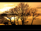 January sun by JQ, Photography->Sunset/Rise gallery