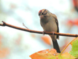 Rainy Days and Mondays by muggsy, Photography->Birds gallery