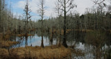Winter Swamp by allisontaylor, photography->landscape gallery