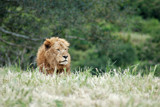 King Alone by dmk, Photography->Animals gallery