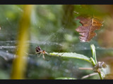 don't worry you're next by jzaw, photography->insects/spiders gallery