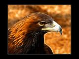 Μίδας by Hottrockin, Photography->Birds gallery