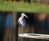 My turn by GomekFlorida, photography->birds gallery