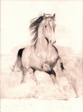 Arabian Stallion 2 by LadySinead, illustrations->traditional gallery