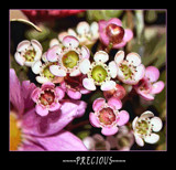 Precious by verenabloo, Photography->Flowers gallery