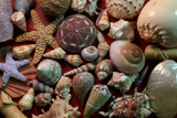 Shells by Paul_Gerritsen, Photography->Still life gallery