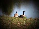 Companion by Hottrockin, Photography->Birds gallery