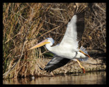 Landing by garrettparkinson, photography->birds gallery