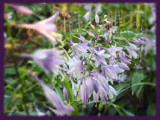 Hosta la Vista by wheedance, Photography->Flowers gallery