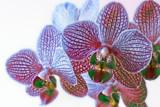 Flower Power by Paul_Gerritsen, photography->manipulation gallery