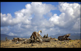 clouds and driftwood by jeenie11, Photography->Landscape gallery