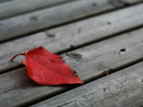 leaf on deck by Canuck_Photo_Guy, photography->macro gallery