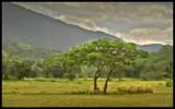 Golden harvest by priyanthab, Photography->Landscape gallery