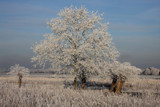 Winter in Holland V by Paul_Gerritsen, Photography->Landscape gallery