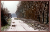 Cat On A Cold Country Road by corngrowth, Photography->Landscape gallery