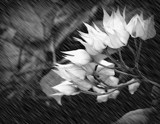 Rain on Flowers by Starglow, photography->manipulation gallery