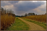 Path To Somewhere by corngrowth, Photography->Landscape gallery
