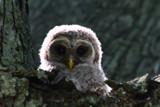 eye to eye by tee, photography->birds gallery