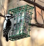 Bird Watching #5 by tigger3, photography->birds gallery