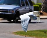 Passing Thru by SR21, Photography->Birds gallery