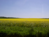 Summer Field by mizme, Photography->Landscape gallery