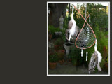Weeping Willow Dream Catcher by bryancito, Photography->Still life gallery