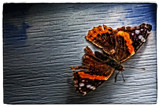 Battered by Eubeen, photography->insects/spiders gallery
