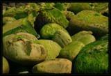 Emerald by Corconia, Photography->Shorelines gallery