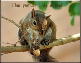 LOL Squirrel by MsCROW, photography->animals gallery