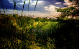 Wetlands by casechaser, photography->landscape gallery