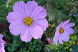 Sunlite by gandarva, Photography->Flowers gallery