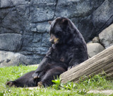 Portrait of a Black Bear #2 by OutdoorsGuy, Photography->Animals gallery