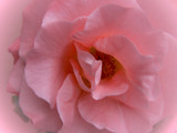 Hidden Secrets of The Heart by LynEve, Photography->Flowers gallery