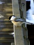 Watch me! by blackwar, Photography->Birds gallery