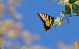 Butterfly and Blue Sky by lilu103, photography->butterflies gallery