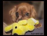 Play With Me? by sharonva, photography->pets gallery