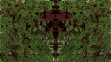 Chocolate Bush by Joanie, abstract->fractal gallery