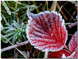 Morning Frost 2 by gerryp, Photography->Nature gallery