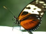 Butterfly Close Up by jeffpratt, Photography->Butterflies gallery