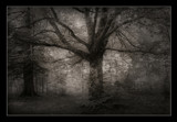 Do be afraid of the woods. by Sivraj, photography->manipulation gallery