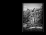 grandfather by TRACYJTZ, Photography->Landscape gallery