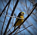 Bird 25 by picardroe, photography->birds gallery