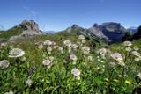 Alpine flowers by Paul_Gerritsen, Photography->Landscape gallery
