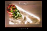 Verena Roses Rest in Peace by evertvankuik, photography->flowers gallery