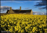 Rape Seed Field by Dunstickin, photography->places of worship gallery