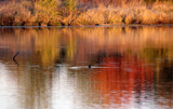 Reflections of Fall by Pistos, photography->water gallery
