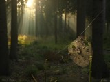 Spider at Morning... by Larser, photography->landscape gallery