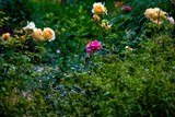 By Any Other Name by gr8fulted, photography->flowers gallery