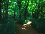 Morning Trek by jojomercury, Photography->Landscape gallery
