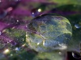 more waterdrops. by pom1, Photography->Textures gallery